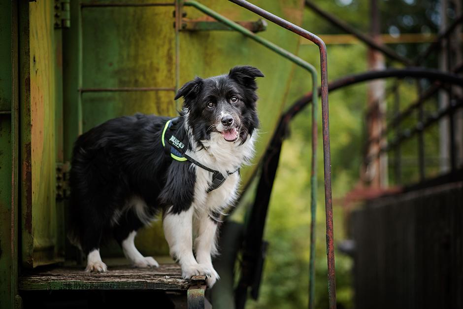 Ivartalanítsuk-e kutyánkat?