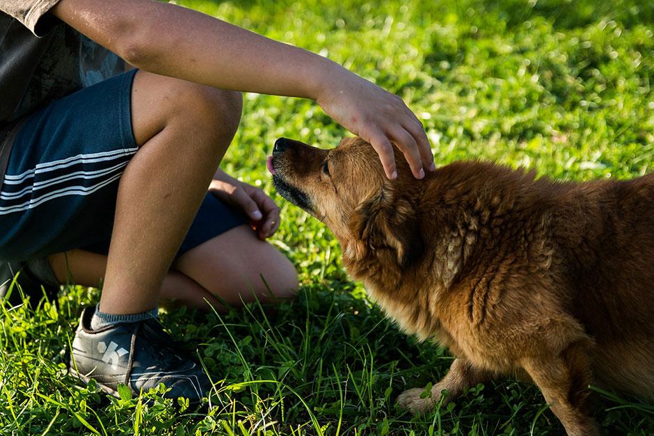 Milyen jogai vannak egy kutyának?
