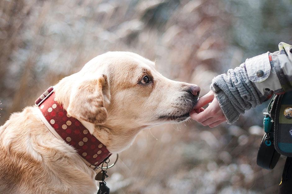 Félénk a kutyád? – Így növeld az önbizalmát!
