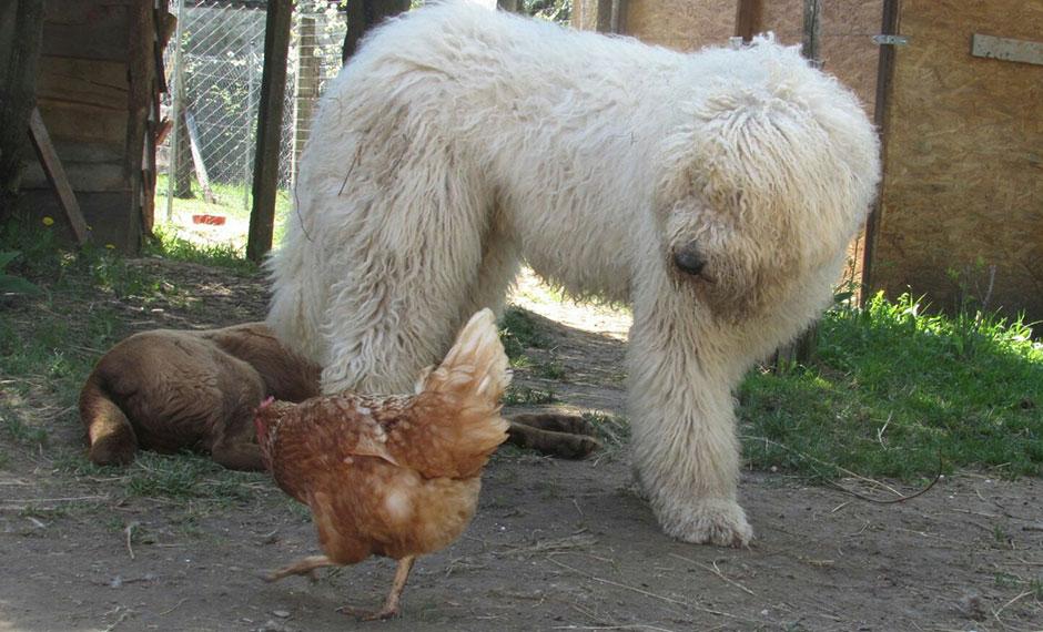 Julius-K9 blog - Állatok a tanyán