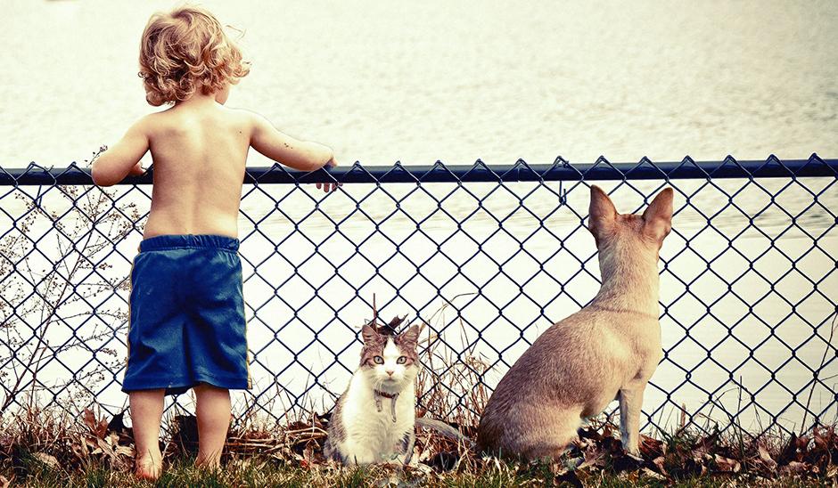 A jótékony kutya