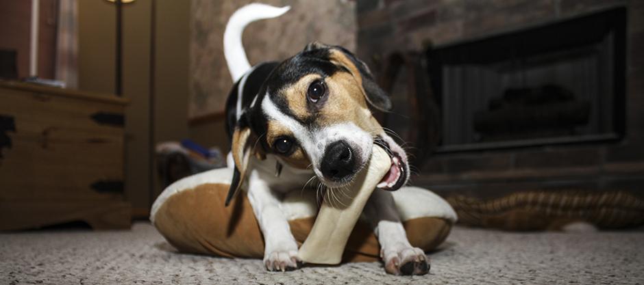 Miért rongál a kutya és mit tehetünk ellene?