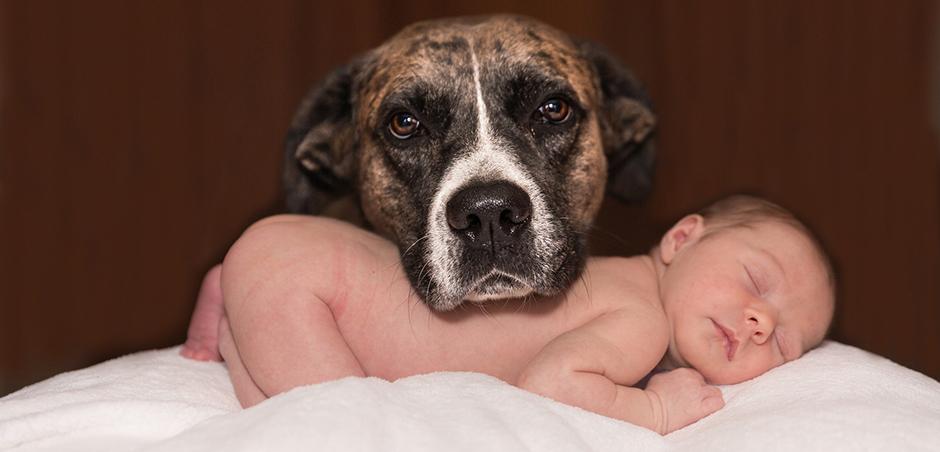 Jön a baba? Így készítsd fel a kutyádat!