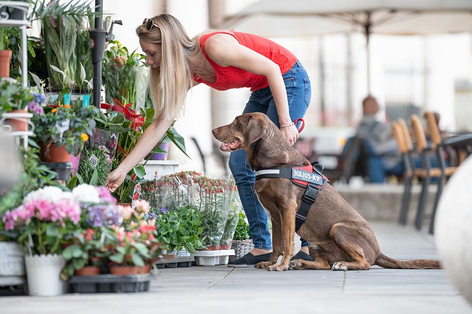 Kutyával a nagyvárosban