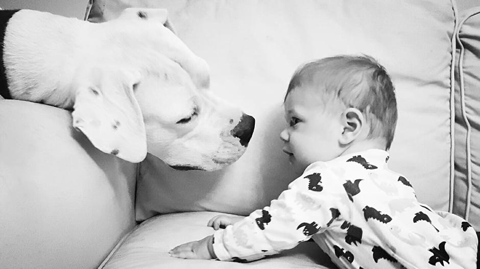 Legjobb társad lehet a siket kutya