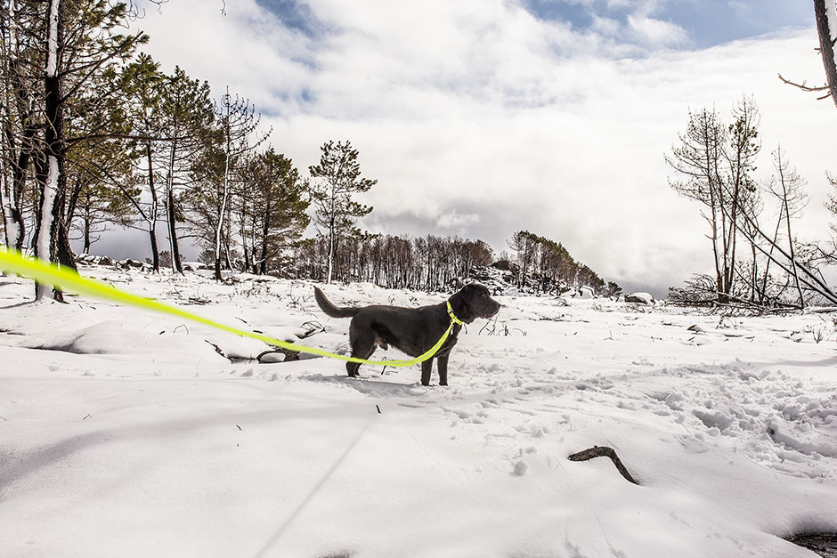 Leashes with handles, rubber and two carabiners – which one should I choose?