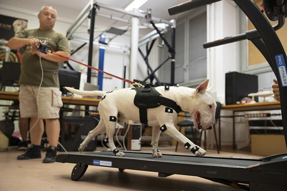 Universitätsforschung über Hundegeschirre