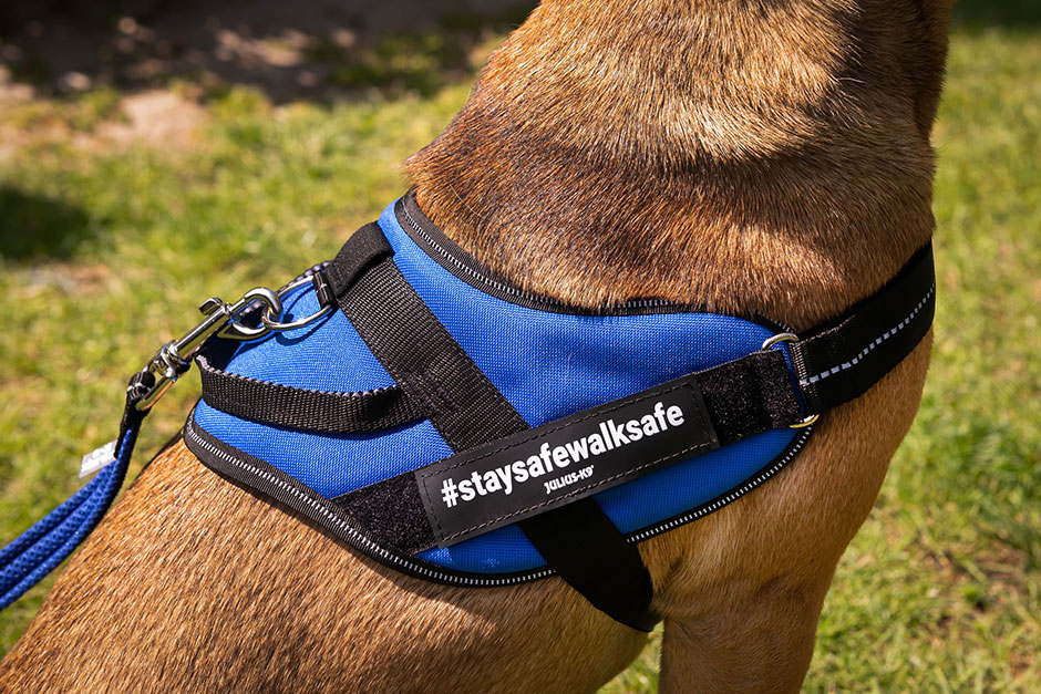 #staysafewalksafe – Gift harnesses for hygienic walks